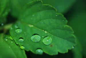 寒色系の緑